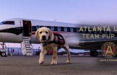 Meet The Newest Member Of MLS Atlanta United…Welcome Spike!